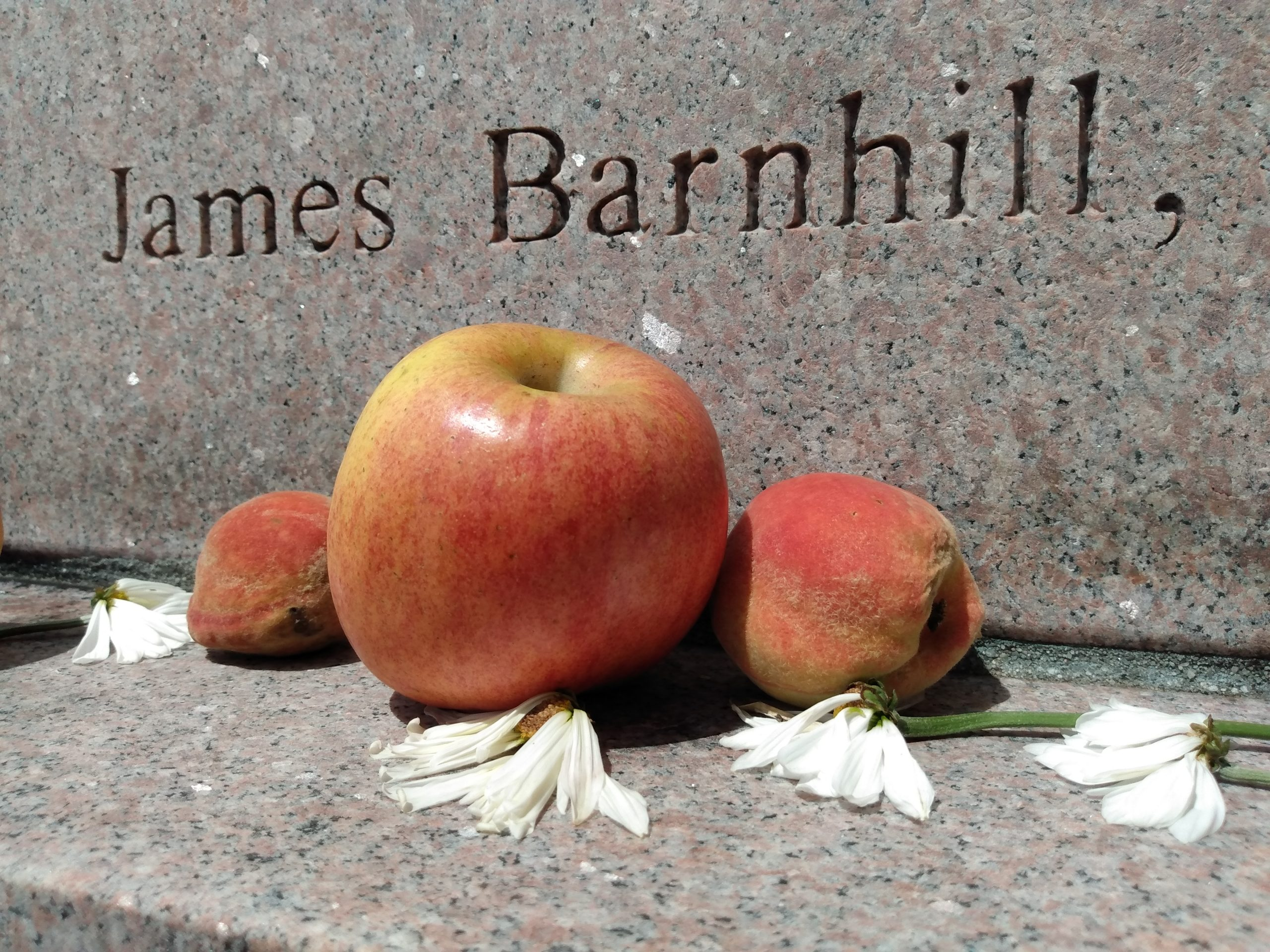 At Minerva: apples, daisies … and peaches?