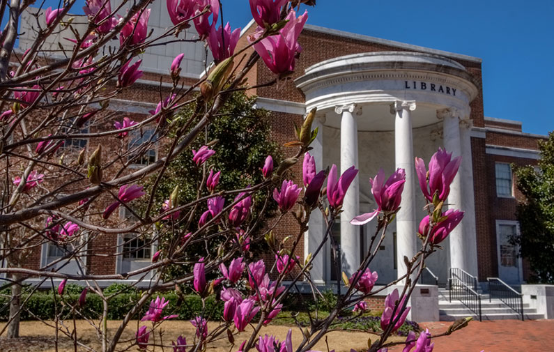 Photo of the Library with spring blooms
