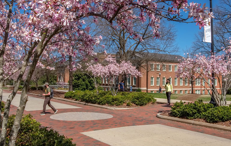 Photo of College Avenue with spring foliage